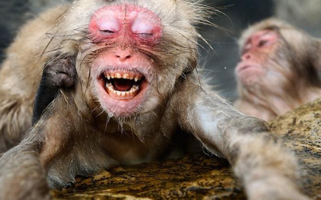 Baño Inteligente Japones:Jasper Doest retrata al macaco japonés